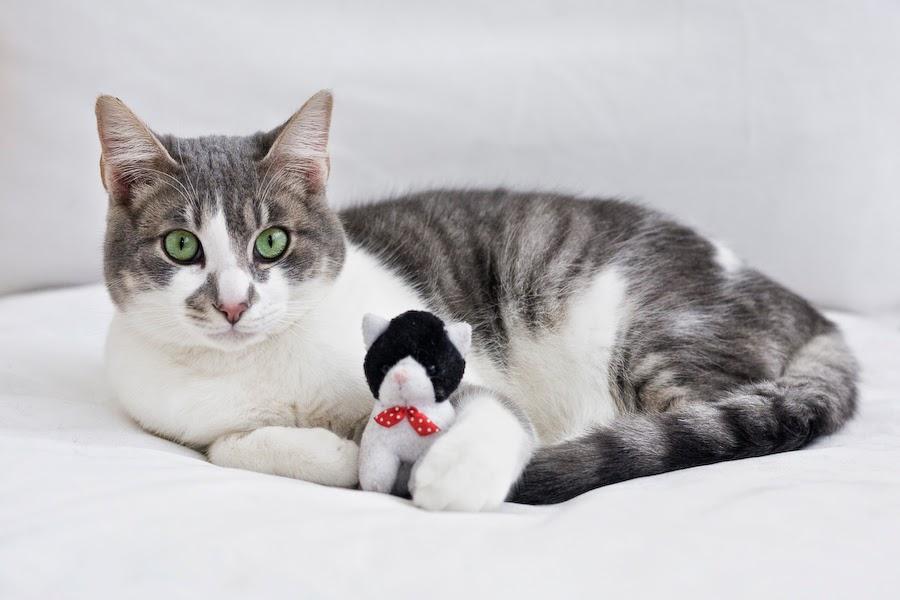 L avocado del gatto la gatta col piatto che scotta - Gatto defeca per casa ...